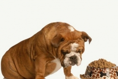 The benefits of choosing an online pet supply shop