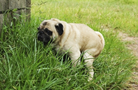 Why dogs eat poop the most common reasons