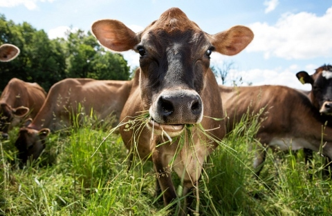 Butchers-Guide-to-Finding-Ethically-Sourced-Meats1