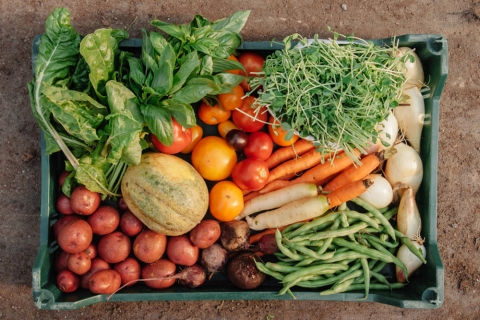 Save Money by Growing Your Own Veggies Picture